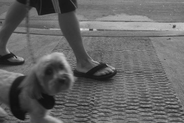 benchdog