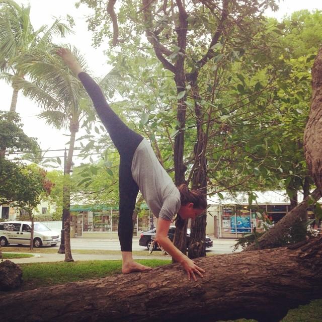 #yogainatree #yogaeverydamnday #iloveyoga #instagood #greenparrotbar #standingsplit almost there