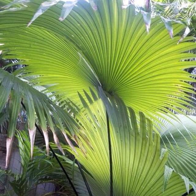 More Palm Garden