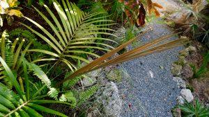 palm frond newest horizontal 1