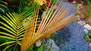 palm new frond