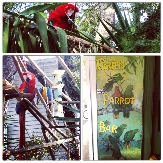 Seeing the #parrots makes me excited to go home to my baby #quakerparrot #birdsofinstagram #greenparrotbar #keywest #florida #home