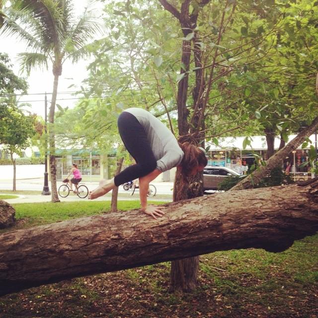 Key West #yogainatree #yogaeverydamnday #crow #greenparrotbar #iloveyoga #instagood