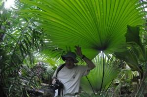 palm society 4