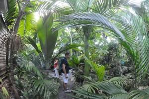 palm society2